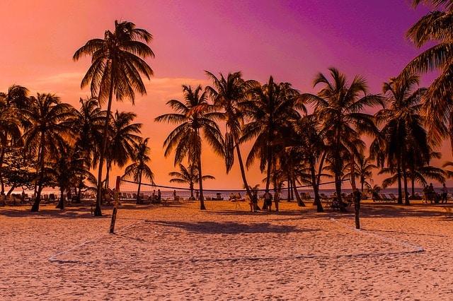 Isla Bacardí - Palmeras en la playa