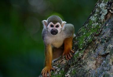 Monkeyland en Punta Cana Mono ardilla