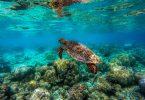 Reef Explorer en Punta Cana