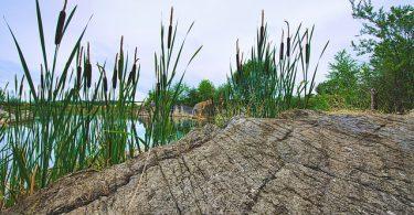 Reserva Ecológica Ojos Indígenas