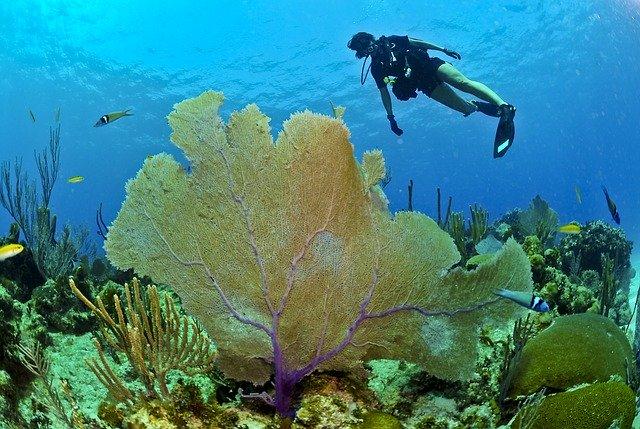 Hacer buceo en República Dominicana